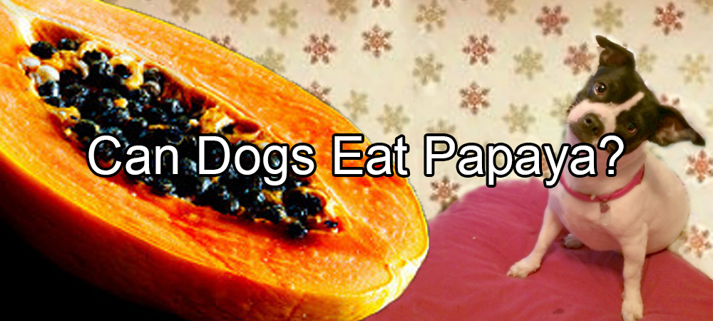 Can A Dog Eat Papaya