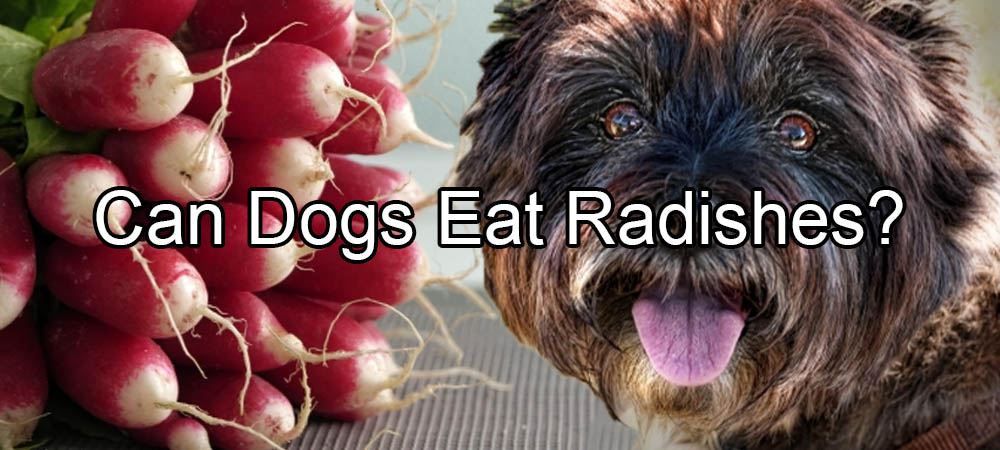 Can Dogs Eat A Radish