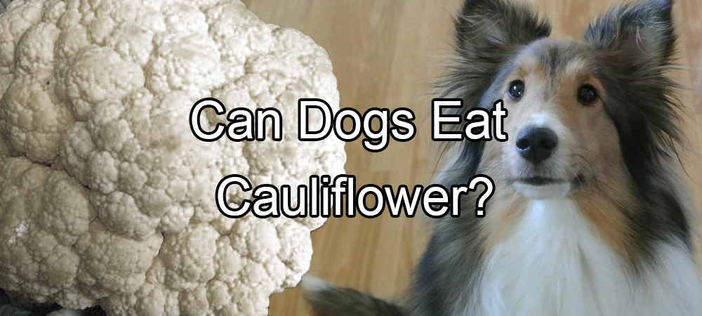 Food pethority dogs for Can my dog eat cooked fish