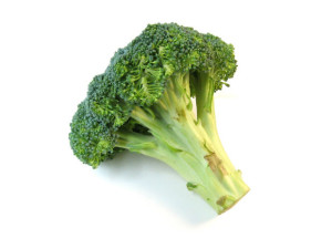 Are Broccoli Stalks Good For Dogs