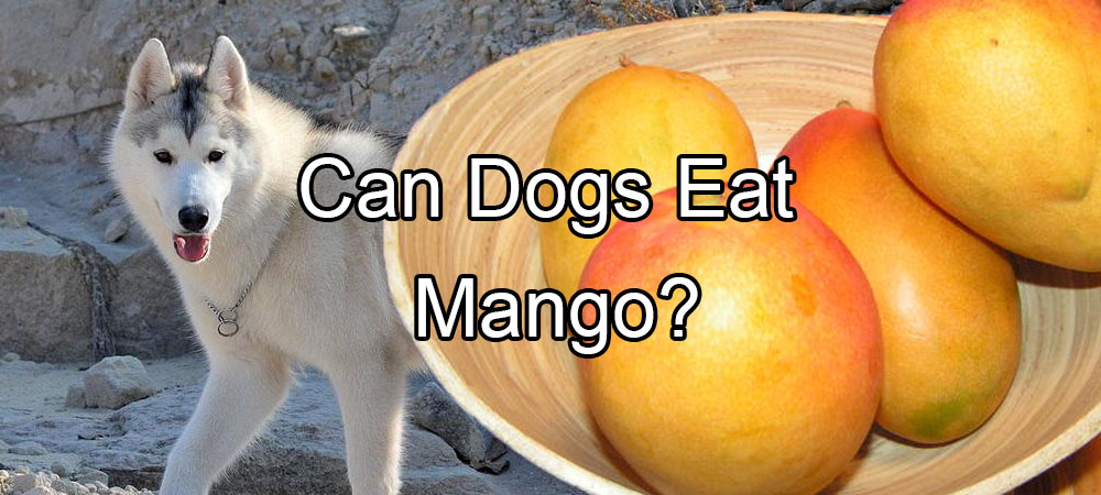 Can Dogs Eat Mango?