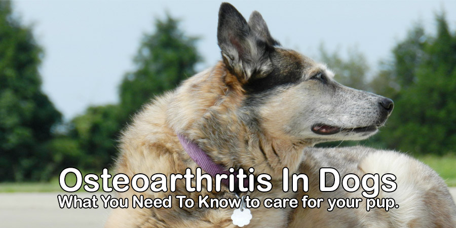 Osteoarthritis In Dogs – What you need to know to care for your pup.