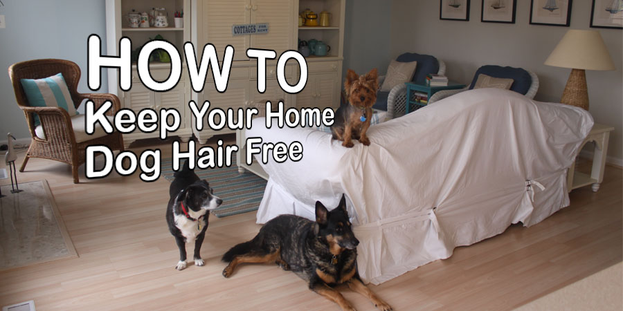 4 Tips On Keeping Your Home Free Of Dog Hair