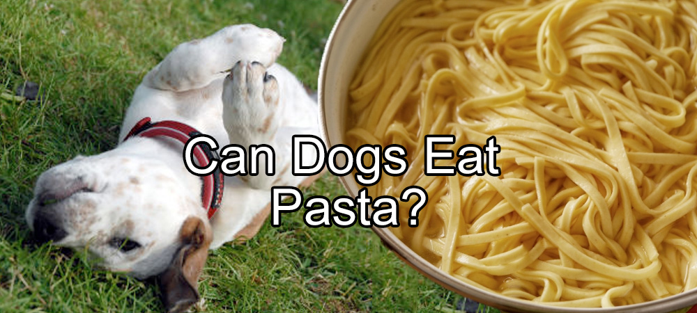 Can Dogs Eat Cooked Onions In Food