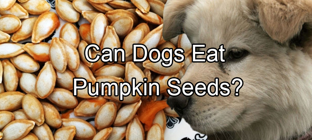 Can Dogs Eat Pumpkin Seeds?