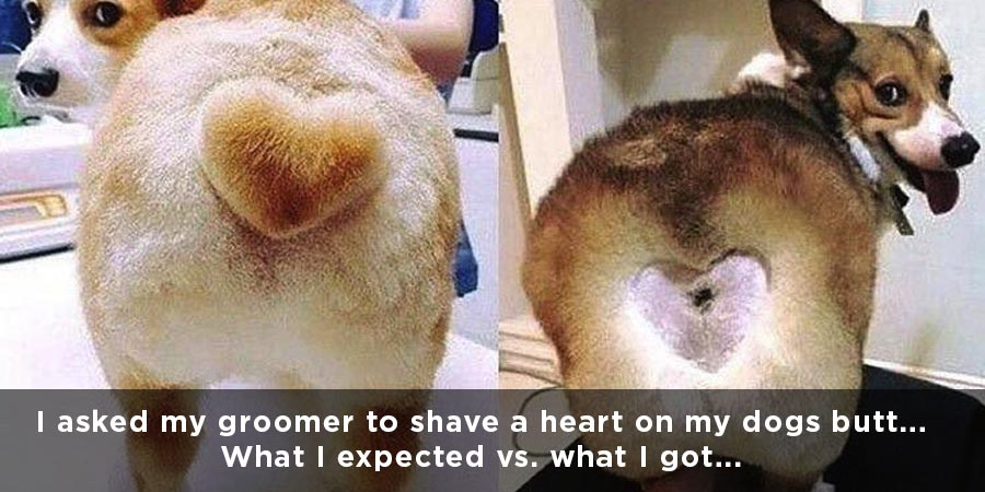 These pet grooming fails are hilarious!