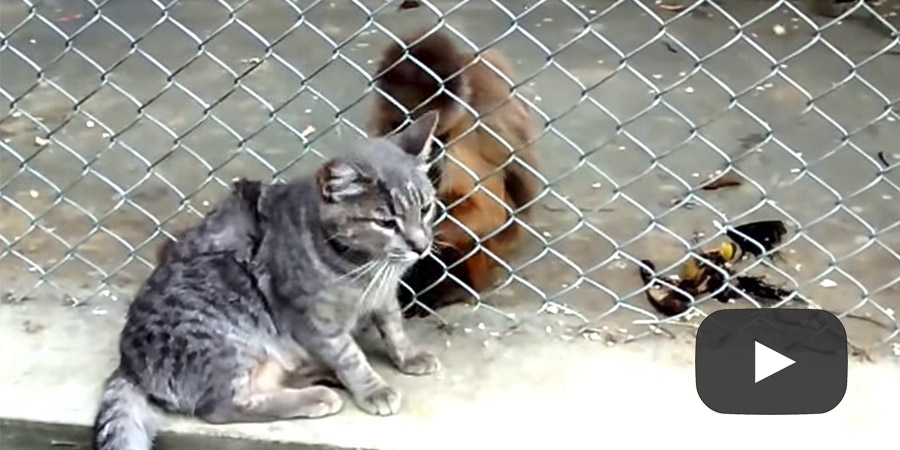 This is so cute! Watch As This Monkey Grooms A Cat!