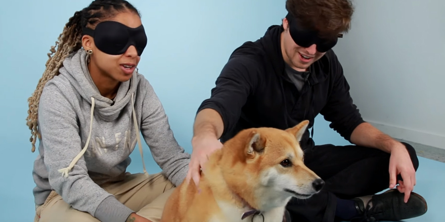 Watch As People Trying To Guess A Dog's Breed By Petting It