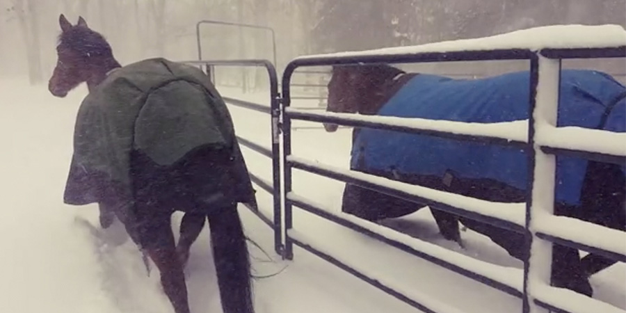 WATCH: These Horses Don't Like Snow!