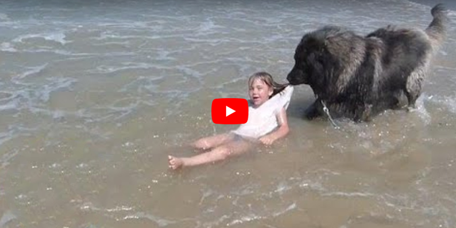 Adorable moment dog 'rescues' girl who is playing in the sea